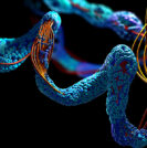 Neural Network Model Can Predict Shape of a Protein | Sperling Prostate Center